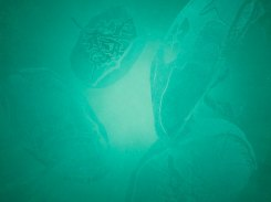 Sarjasta; Kuunvalon varjot III, puupiirros, 2012, 32x32 cm